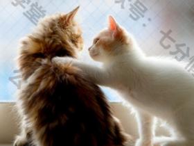 """比起""""我爱你""""对女生表白的话,这三句,让女生无法自拔"""